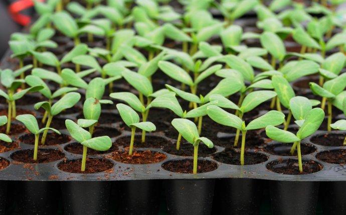 Выращивание рассады: 15 самых серьезных ошибок