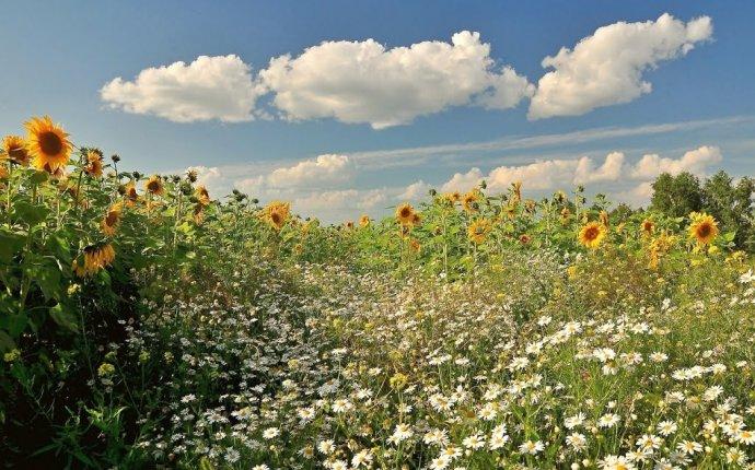 Восстановление естественного плодородия почв